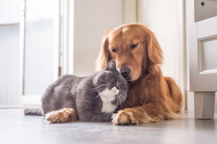 A dog and cat sitting together