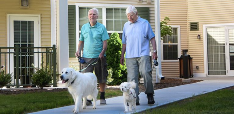 Two senior men enjoying walk around the grounds with dogs
