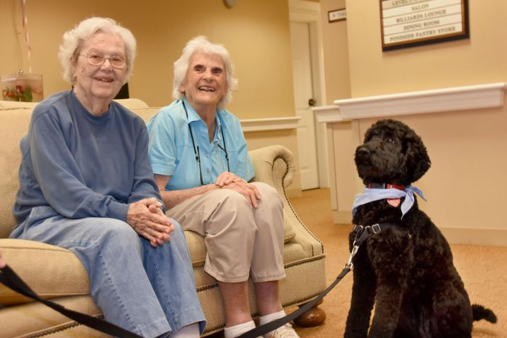 Enjoy Visits From Our Pet Therapy Dogs