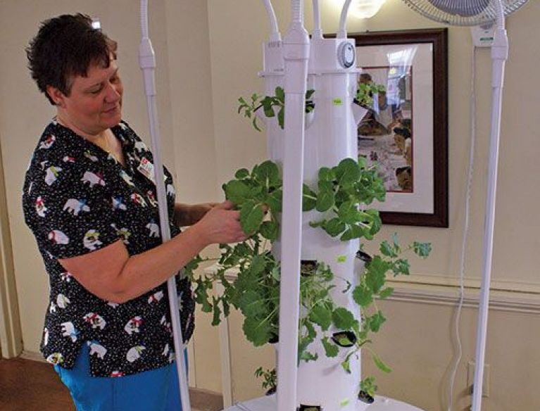 Nurse works on Indoor hydroponic tower garden at MHC